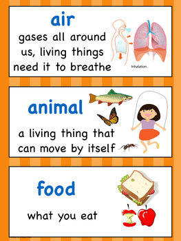 Kindergarten NGSS Vocabulary for Your Word Wall