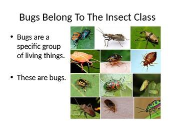 It's Not a Bug
