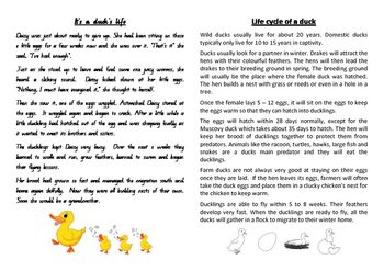 It's a duck's life - narrative and informative text comprehension