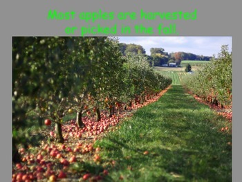 Fall Apple Orchard (Science)