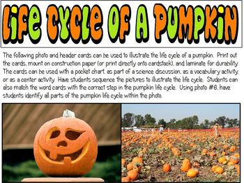 Pumpkin Activities for Reading, Science, Math & More