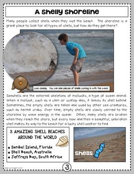 It's Shore Pretty!  A Nonfiction SMARTICLE About the Ocean Shore  (Grades 2-4)