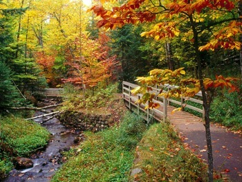 """It's a """"Fall"""" Kind of Time! Fall Cinquain Poetry"""
