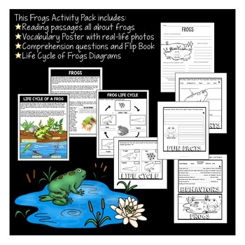 All About Frogs   Life Cycle of a Frog   Frog Flip Book