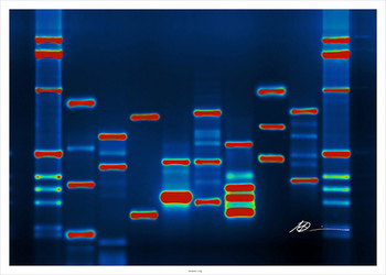 It's in Your Genes ... (Genetic Pedigree and Disease Project)