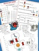Itsy Bitsy Spider, Math, Learning Cube, Roll, Graph and Count, Spiders