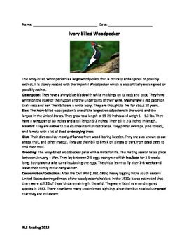 Ivory Billed Woodpecker Review Article Endangered Questions Vocab Wordsearch