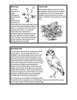 J. Craighead George Novel Study, Ecology & Food Webs - The Prairie