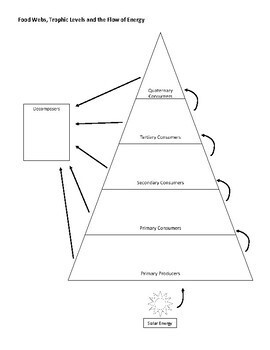 J. Craighead George Novel Study, Ecology & Food Webs - The Tropical Rainforest