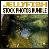 Jellyfish Articles Stock Photos for Ocean Animal Research Bundle