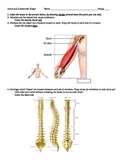 JOINTS AND CONNECTIVE TISSUE WORKSHEET