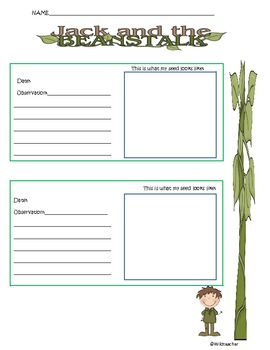 Jack and the Beanstalk Bean Observation