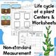 Plants ~Jack and the Beanstalk ~  Math, Science, ELA {PK/K}