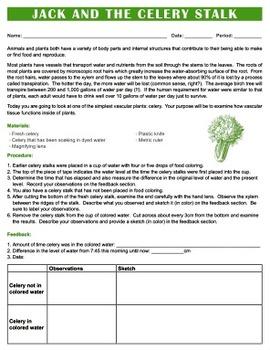Celery Lab - Vascular Tissue, Xylem, Lab {Editable}