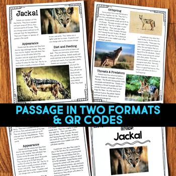 Jackal: Informational Article, QR Code Research & Fact Sort