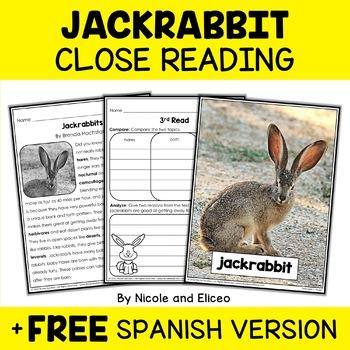 Close Reading Jackrabbit Activities