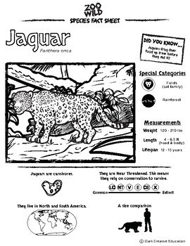 Jaguar -- 10 Resources -- Coloring Pages, Reading & Activities