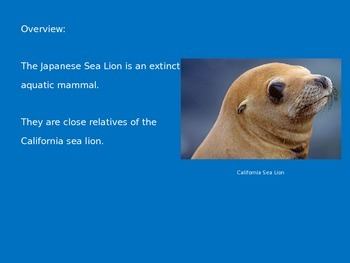 Japanese Sea Lion - Power Point - Extinct - Facts Information Pictures