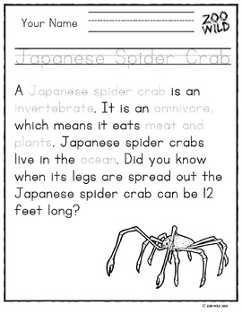 Japanese Spider Crab -- 10 Resources -- Coloring Pages, Reading & Activities