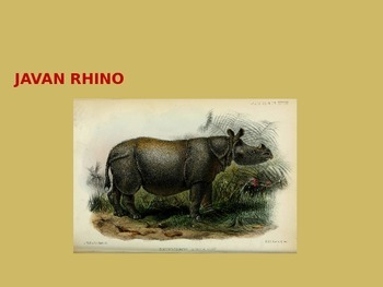 Javan Rhino - Power Point - Information Facts Pictures Endangered