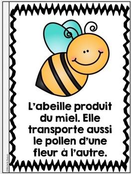 Je peux lire SÉRIE 3 - LES INSECTES - French Emergent Reader Mini book