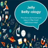 Jelly Bean Dichotomous Key