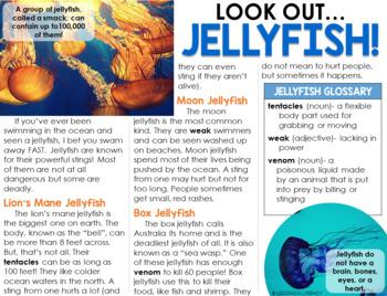 Close Read- Jellyfish