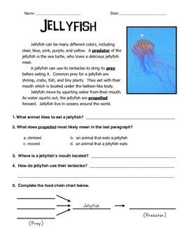 Jellyfish Informational Text
