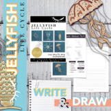 Jellyfish Worksheet Directed Drawing and Writing Activity