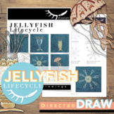Life Cycle of a Jellyfish Directed Drawings for Distance Learning