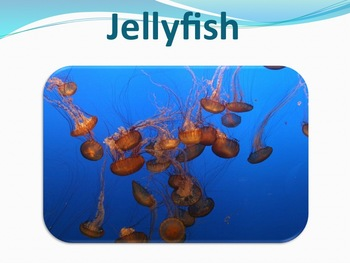 Jellyfish - Marine Life Vol. 1 - Slideshow Powerpoint Presentation