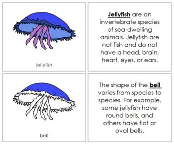 Jellyfish Nomenclature Book