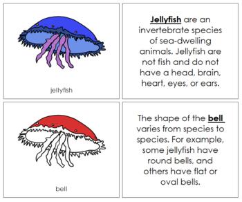 Jellyfish Nomenclature Book (Red)