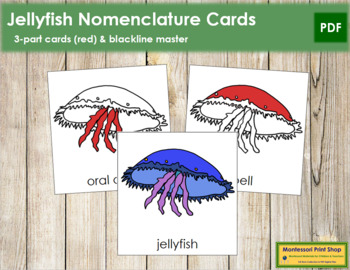 Jellyfish Nomenclature Cards (Red)
