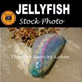 Jellyfish Stock Photo #288