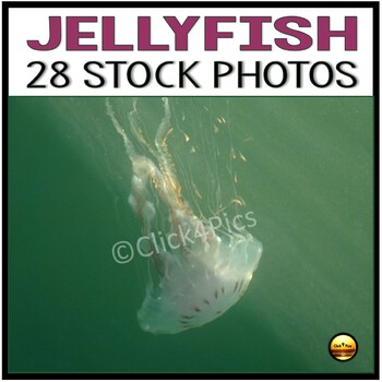 Jellyfish Stock Photos Set Two for Commercial Use