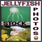 Stock Photos: JellyFish Commercial and Personal Use