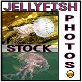 Stock Photos: Colorful Jellyfish