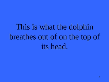 Jeopardy Game- Dolphins