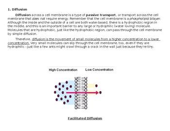 Jigsaw: Cellular Transport