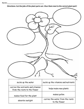 Jobs Of Plant Parts By Interactive Learning At Its Best Tpt