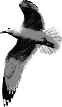 Johnathan Livingston Seagull - Seagull Clip Art