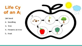 Johnny Appleseed - Life Cycle of an Apple - powerpoint