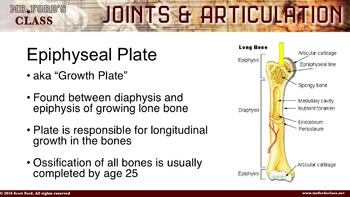 Joints and Articulations: Anatomy & Physiology