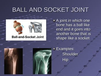 Joints of the Human Body