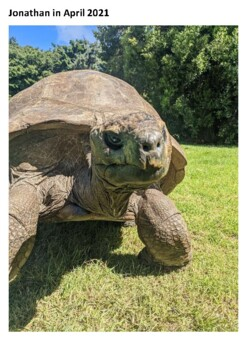 Jonathan the giant tortoise Word Search
