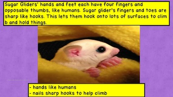 Jot Note Game to Improve Note Taking Skills-Sugar Gliders