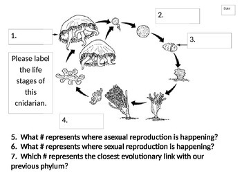 Journal Packet for Phylum Cnidaria