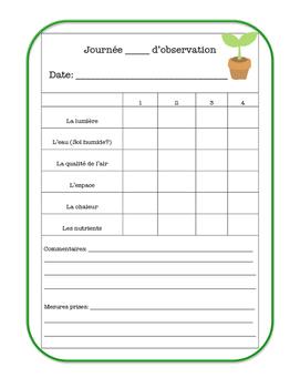 Journal de l'expérience: La croissance des plantes