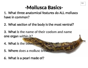 Journal (or do-now) packet for Phylum Mollusca